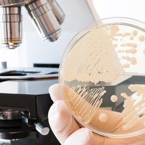 微生物検査・試験